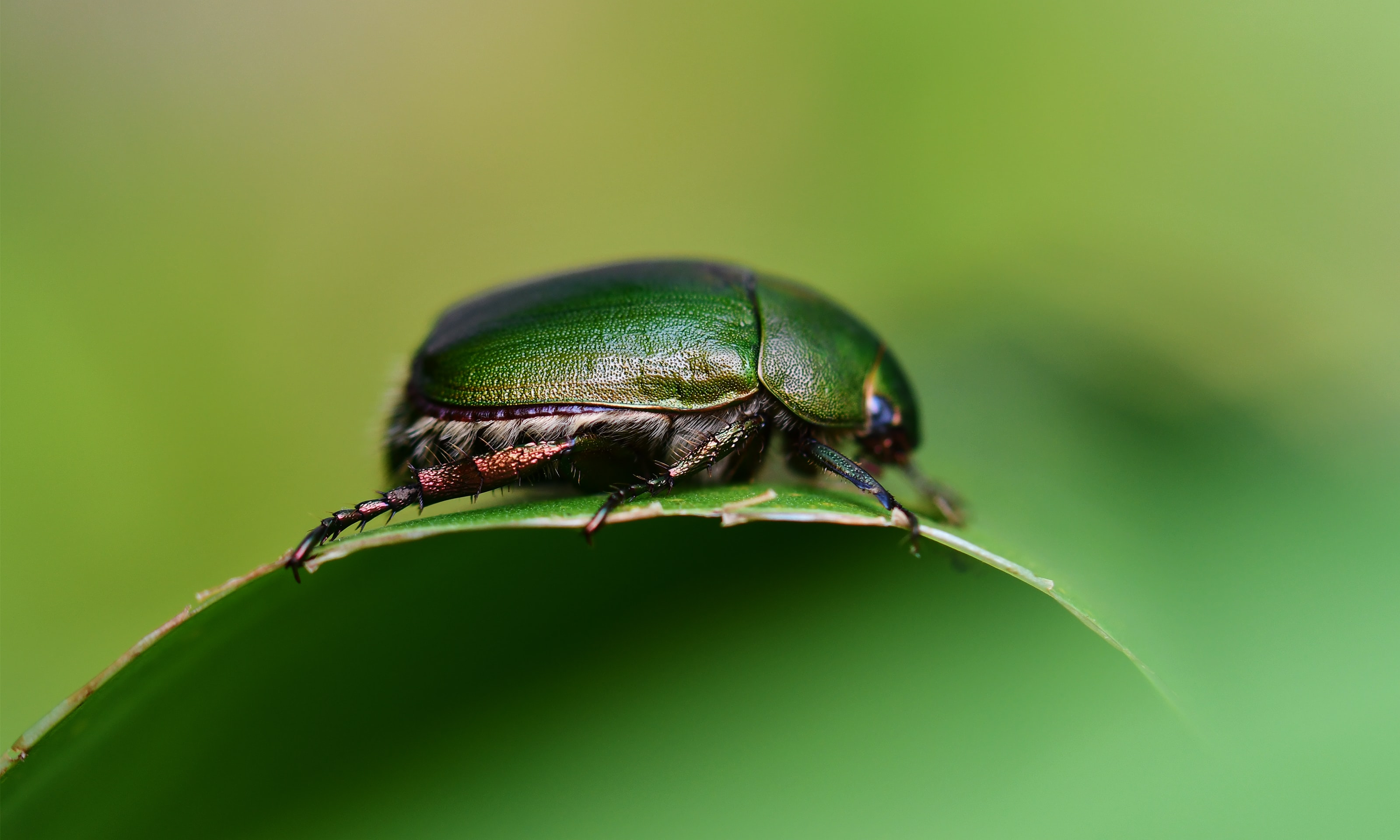 close photo of green beetle
