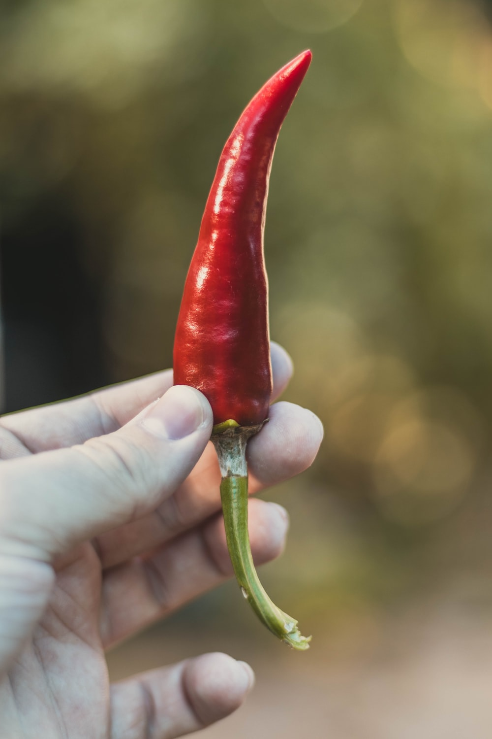 person holding red chili pepper