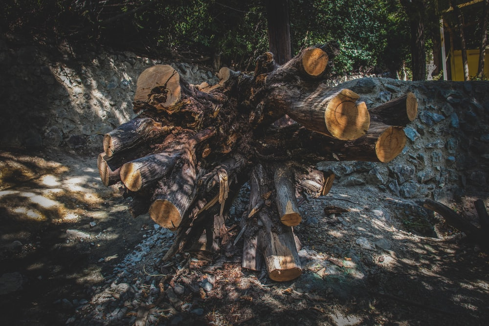 piles of tree logs