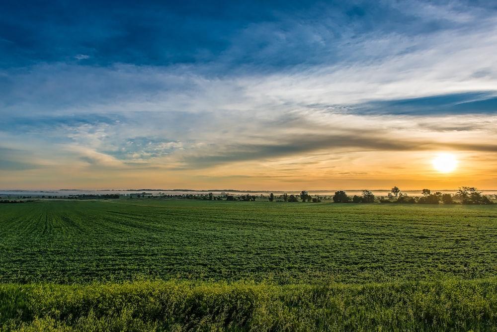 green grass field during golden time
