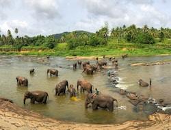Kandy - Peradeniya - Pinnawela - Flughafen (170km)