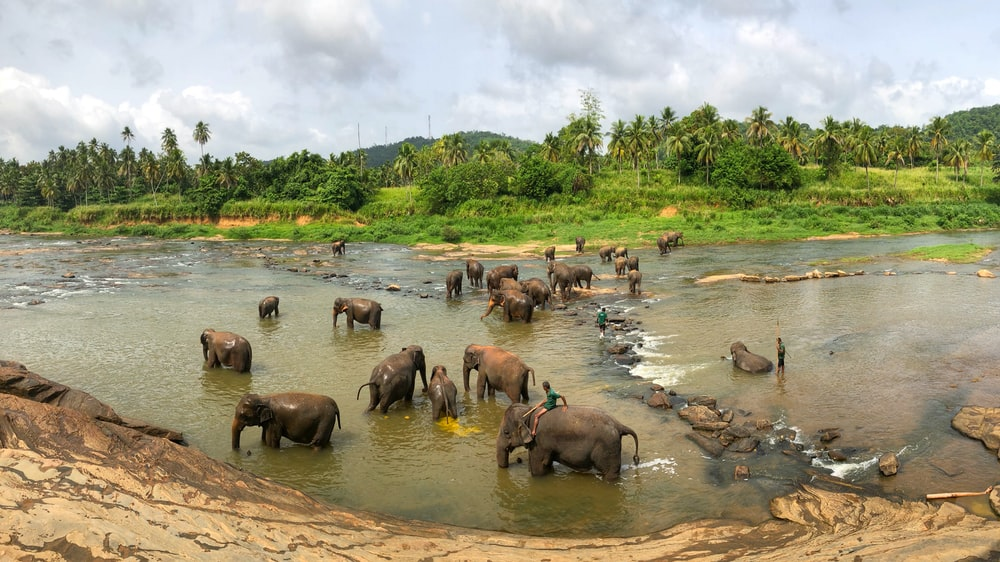 black elephants on body of water at daytime