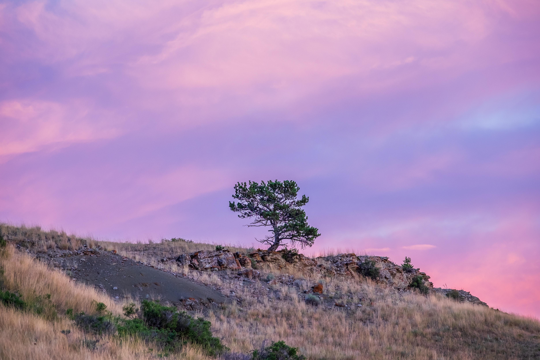 green tree on hill