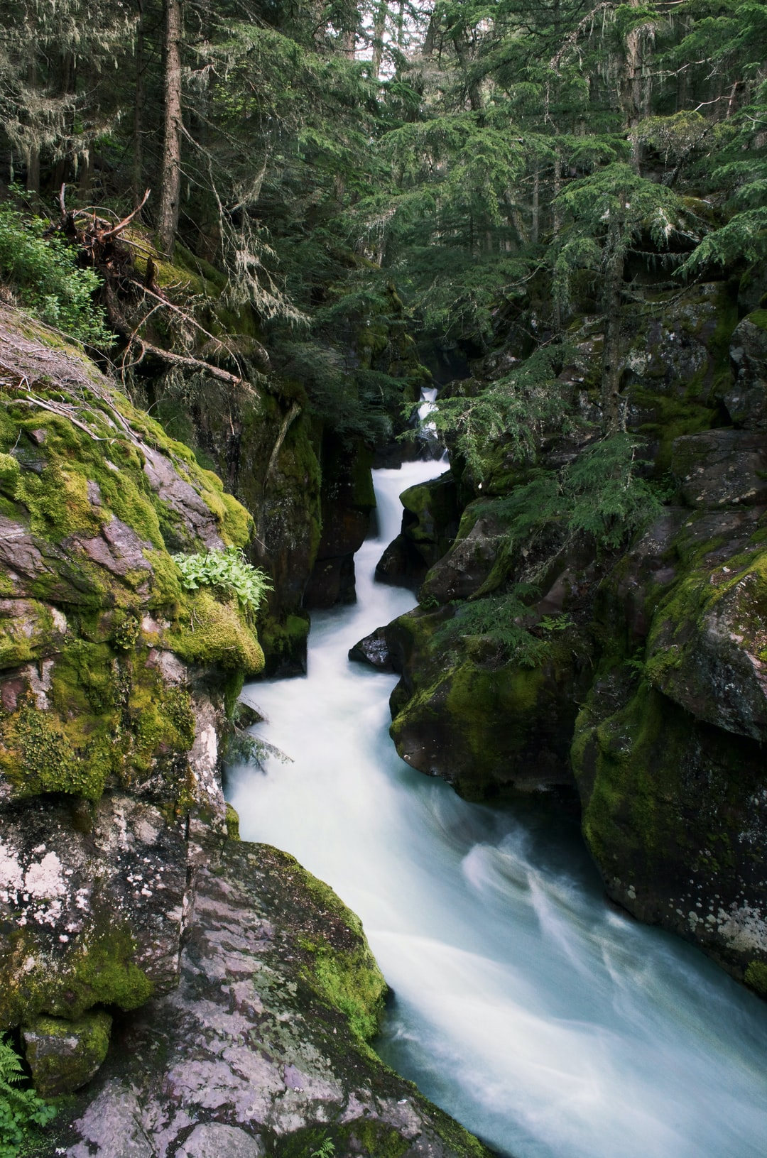 Avalanche creek running through the woods near the going to the sun road in Glacier National Park.
