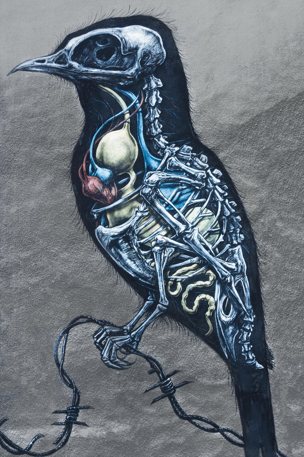 bird organs and skeleton painting