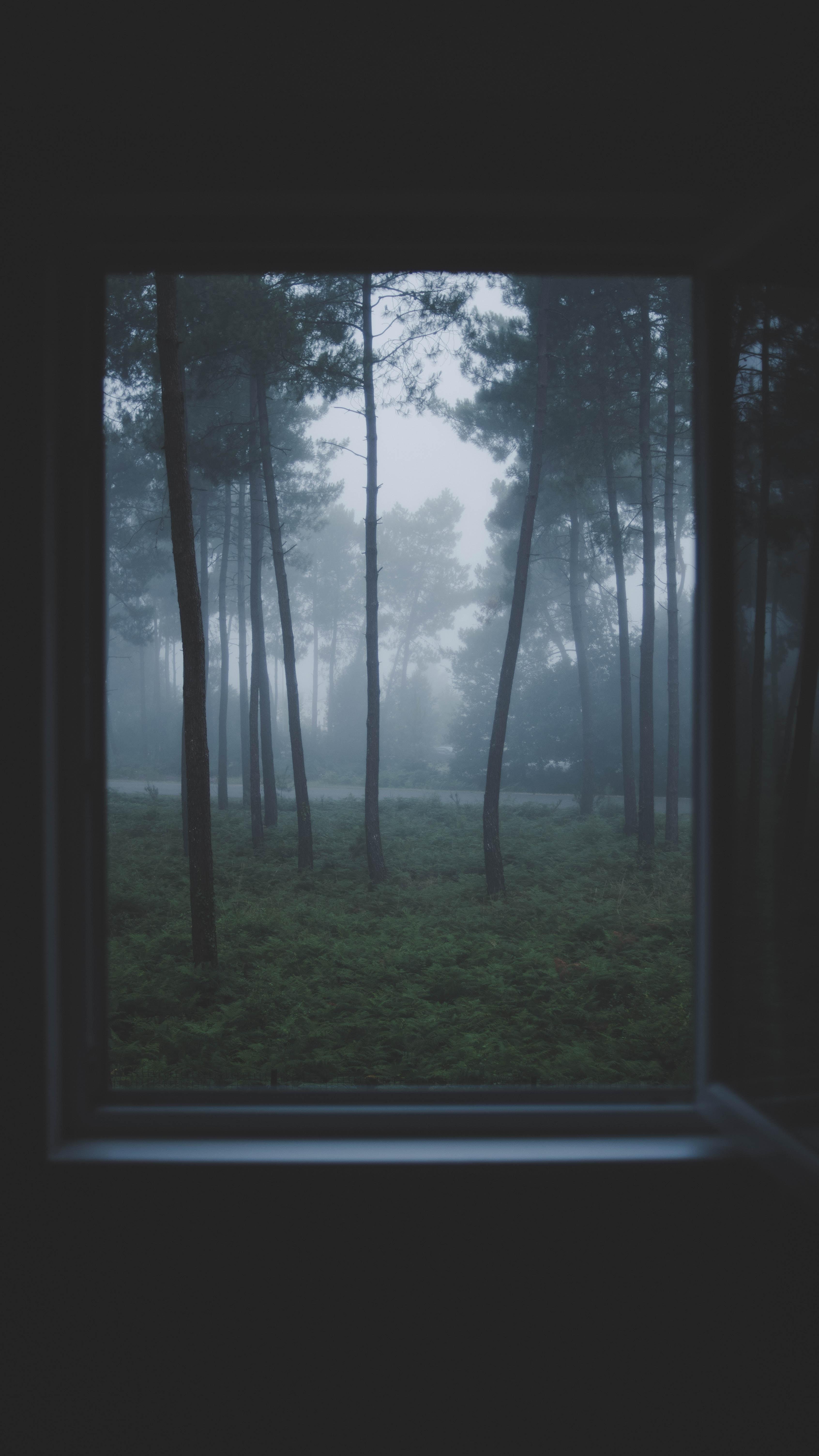 opened white-framed glass window