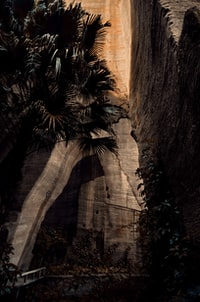 green palm tree beside brown mountain