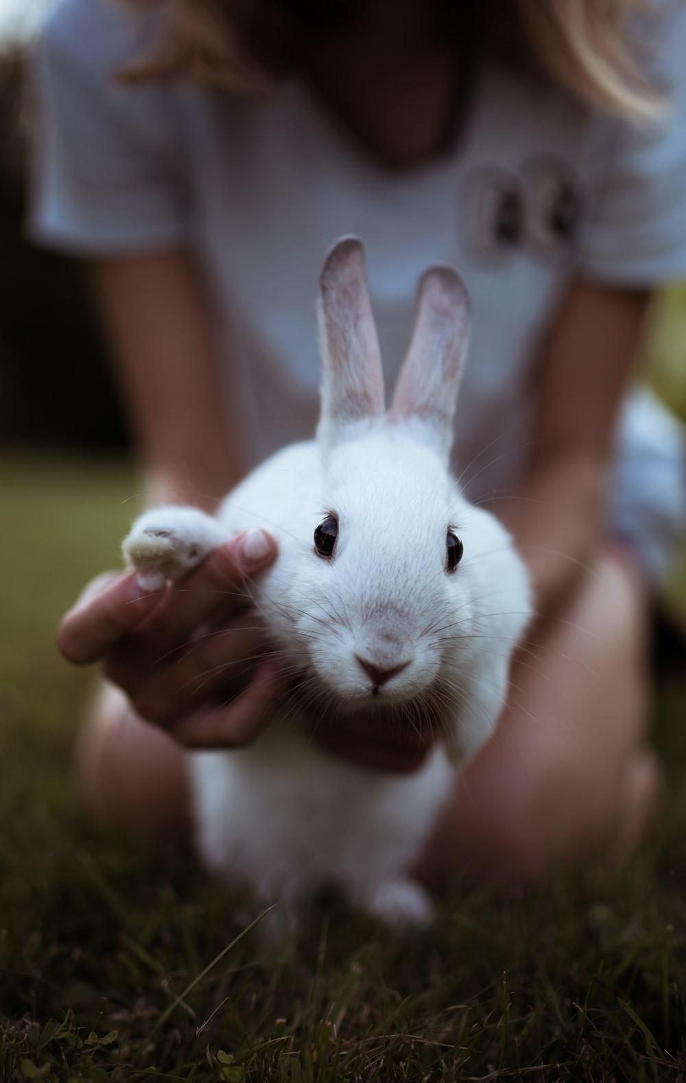 girl holding white rabbit