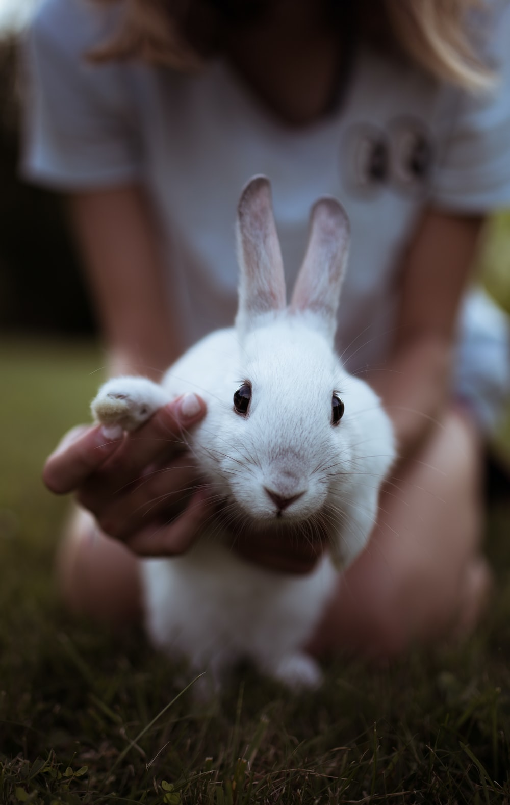 girl holding white rabbit