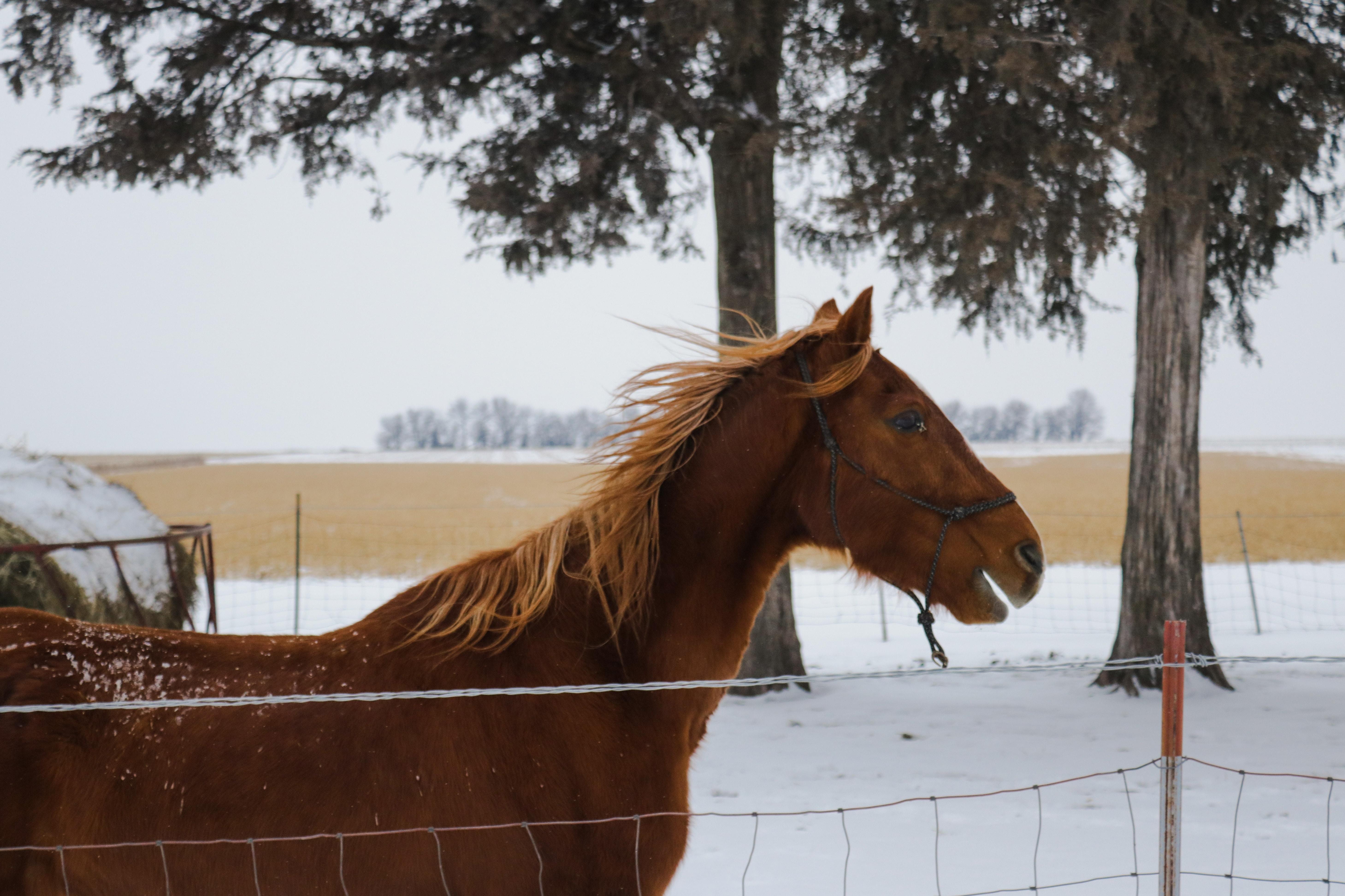 horse on snow field near trees