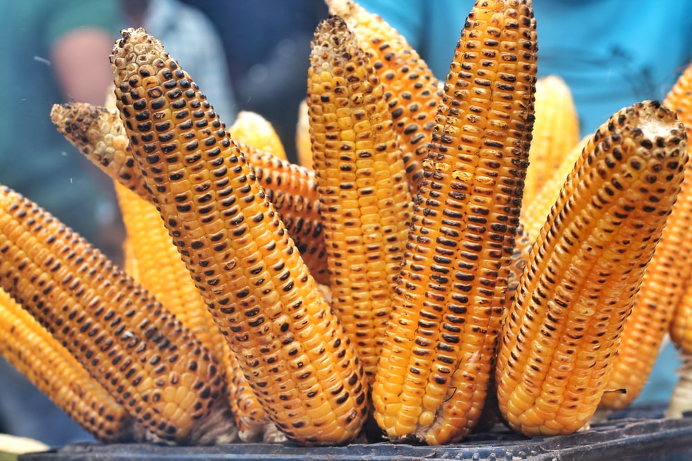 close photo of grilled corn
