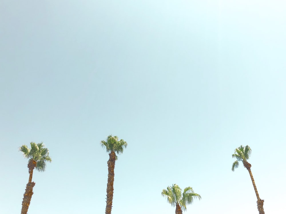 palm trees pictures download free images on unsplash
