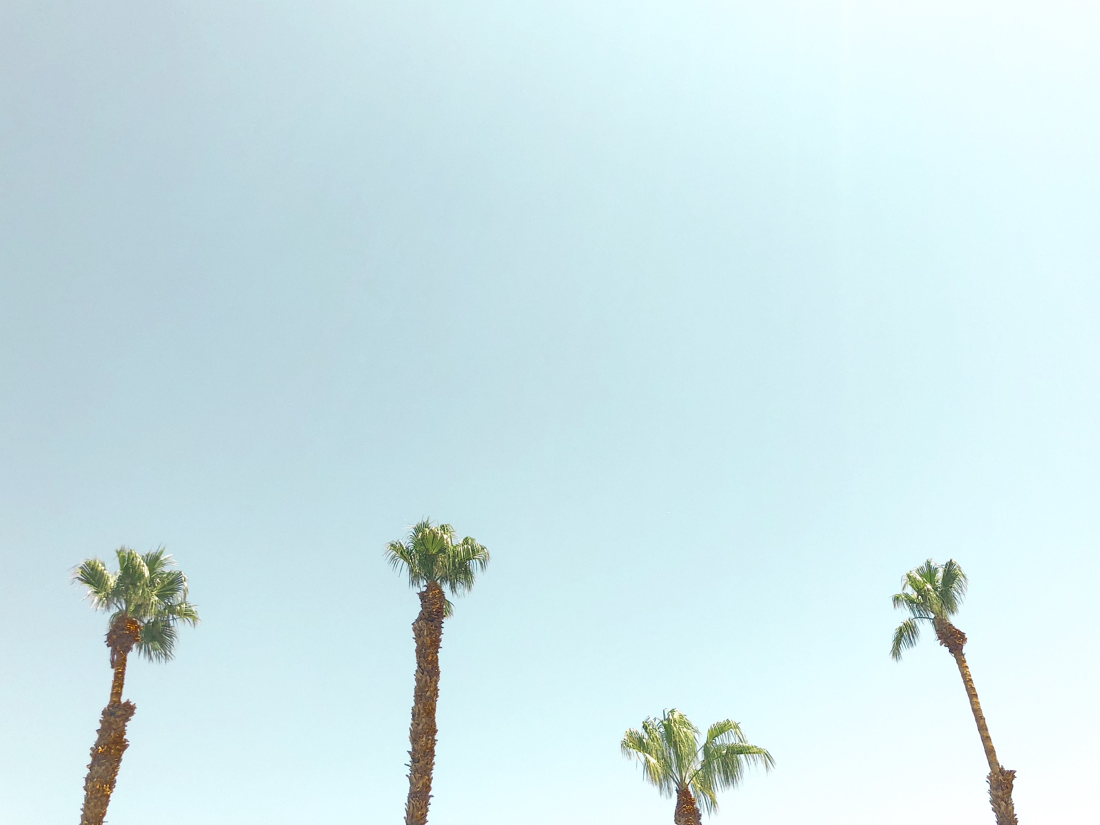 four green palm trees