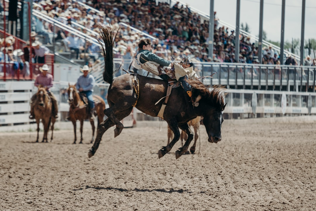 Lane McGehee for 86 points on Stace Smith's 987 Cactus Black. Cactus Black was going berserk, as you can tell in this picture. Great ride. July 29, 2018 Cheyenne Frontier Days.