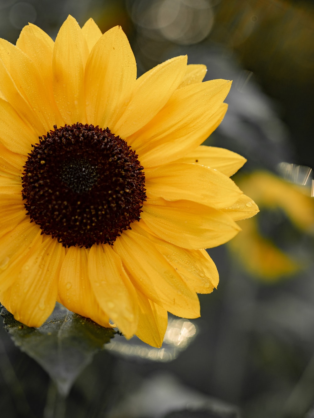 tilt shift photography of yellow and black flower
