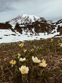 mountain peak near flowers