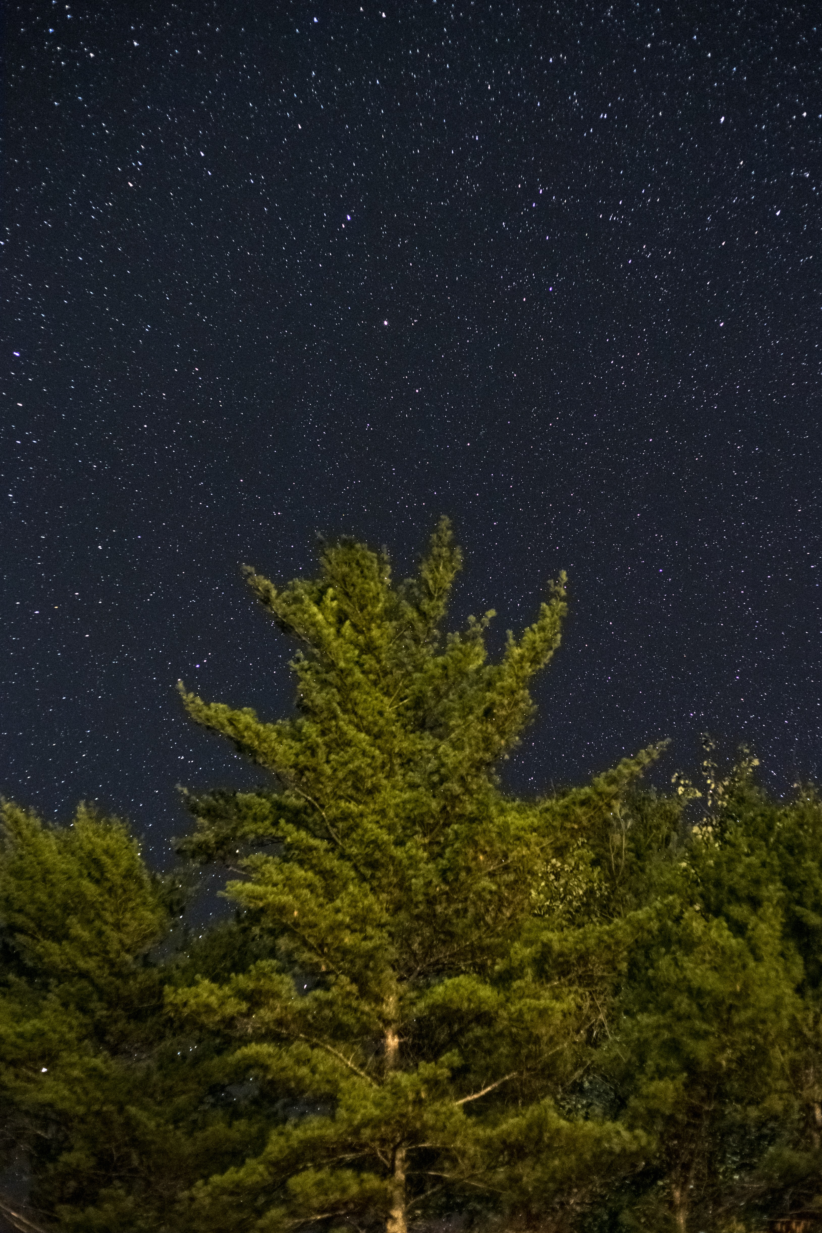 green tress during night time