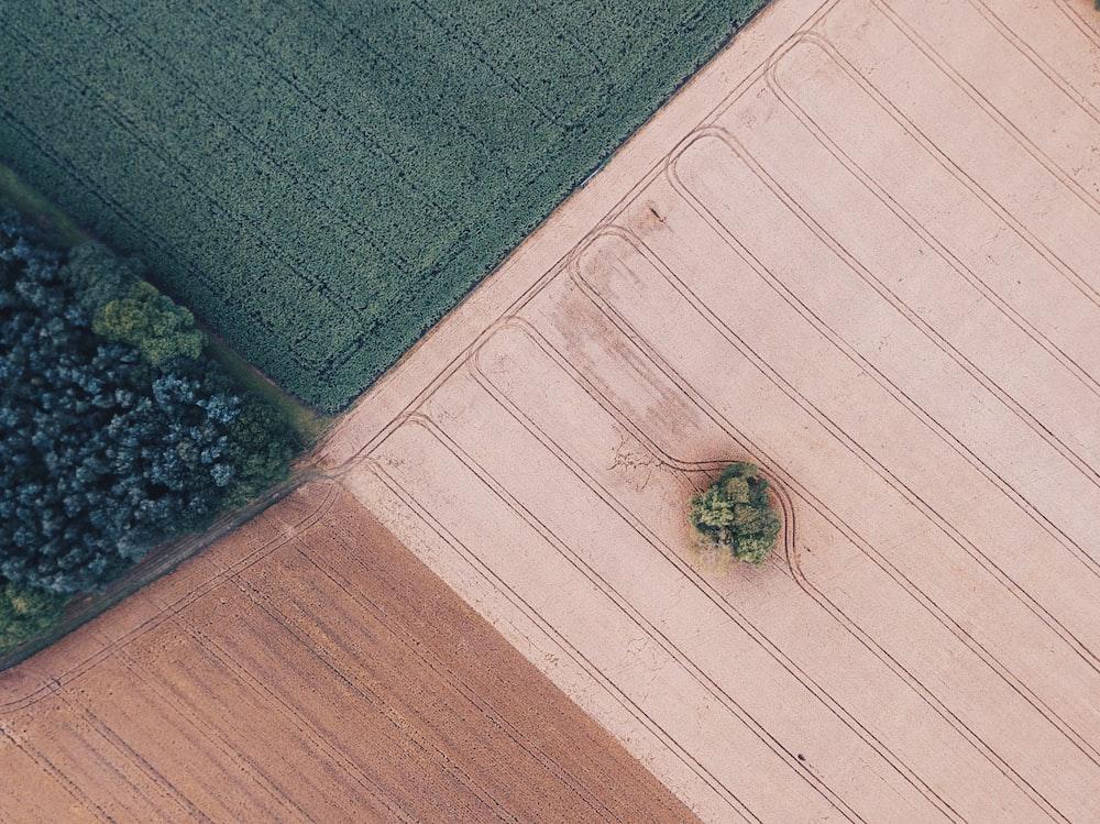 trees on wide field