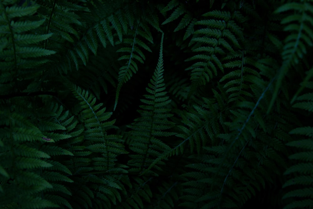 green ferns on a black background
