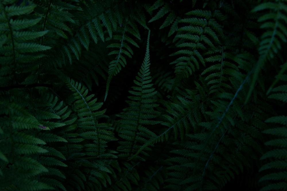 green ferns on a black background