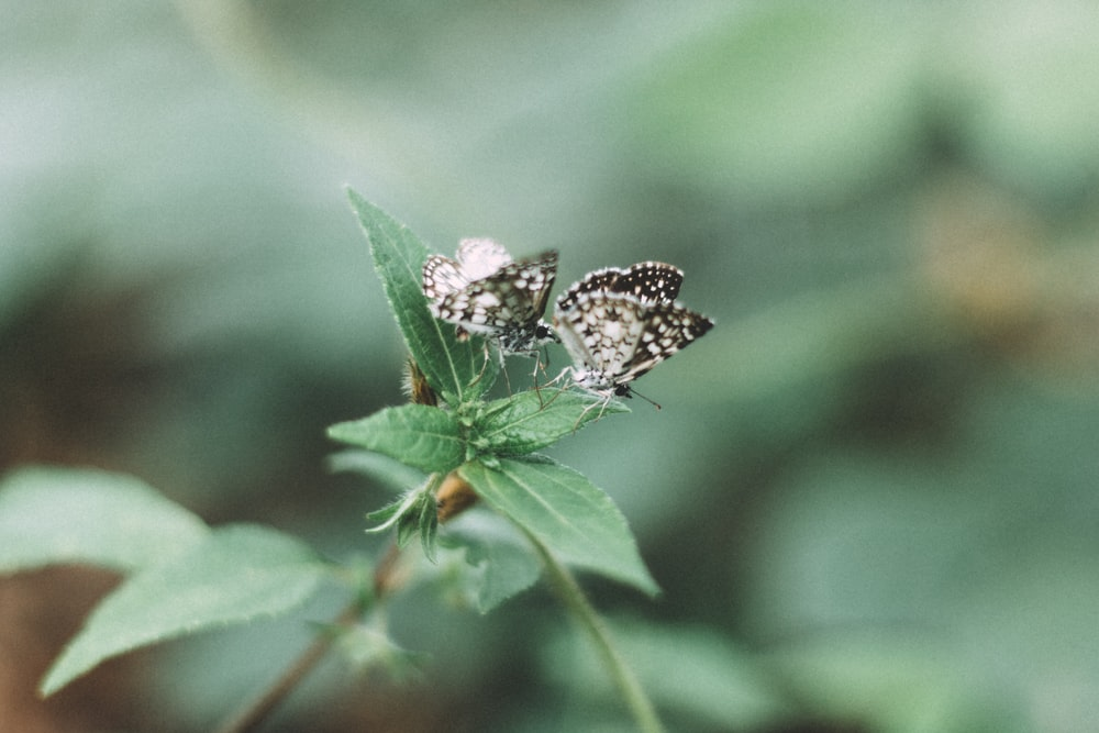 two butterflies on green plant