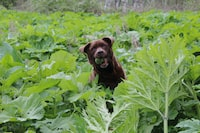 brown dog in the middle of green plants
