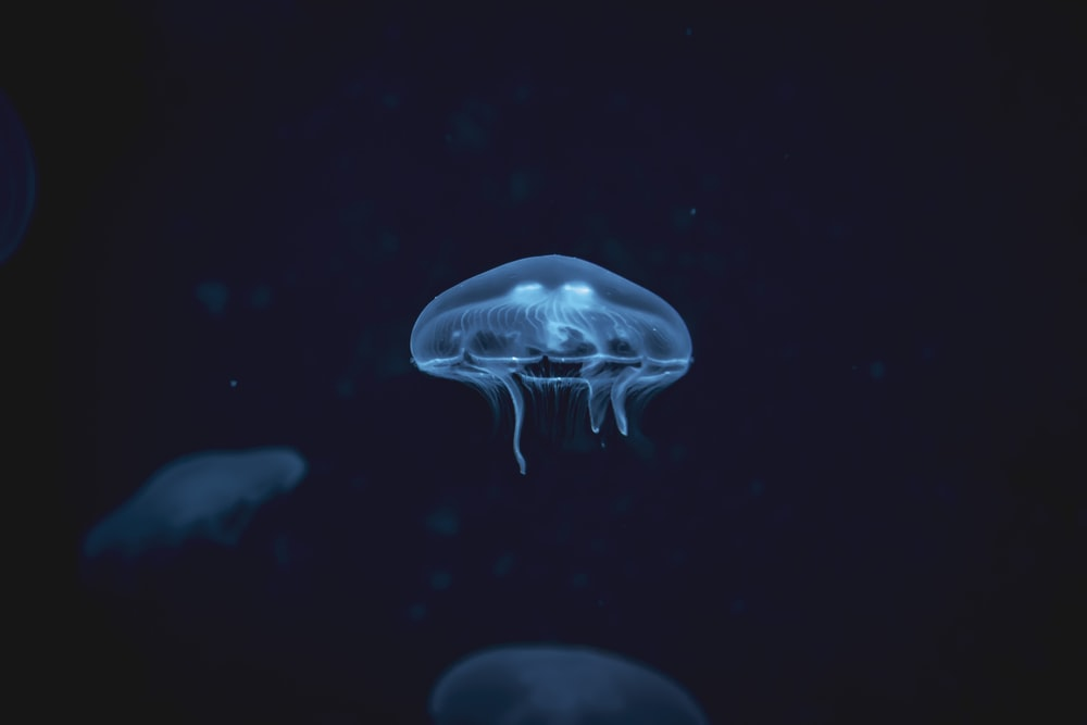 white jellyfish digital wallpaper