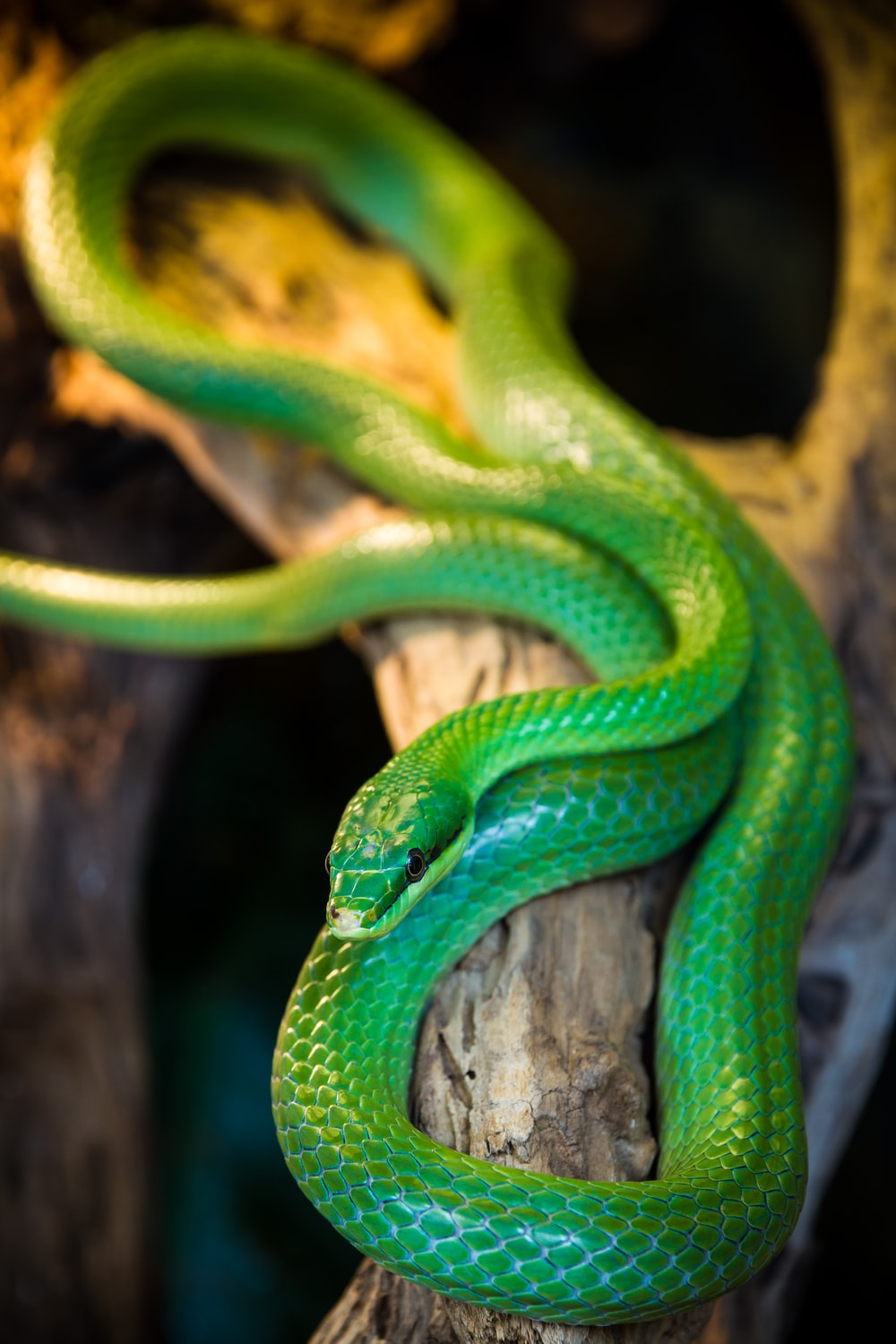 selective focus photography green snake on tree branch
