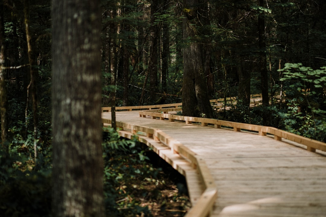 the all new visitors center trail at north cascades national park! by Matt Whitacre
