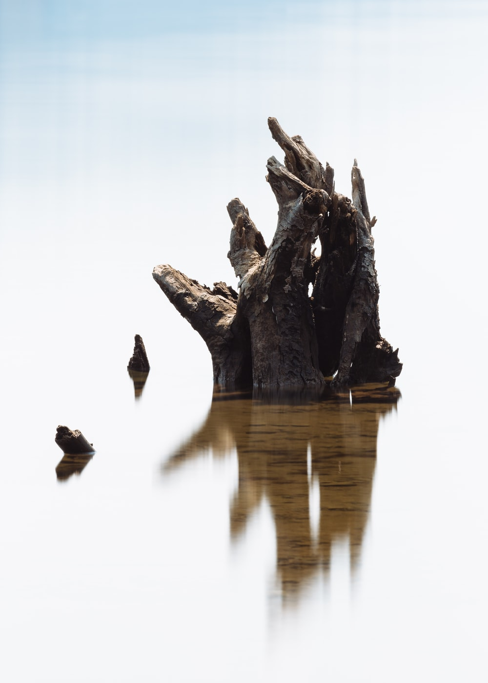 brown wood log on bodt water