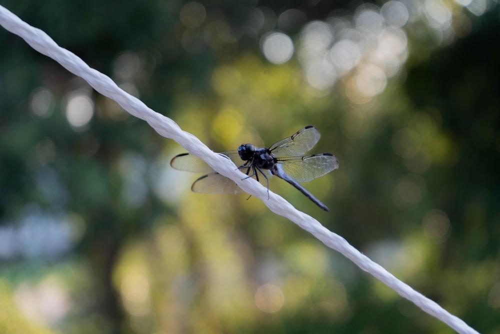 tilt shift lens photography of dragonfly on white string