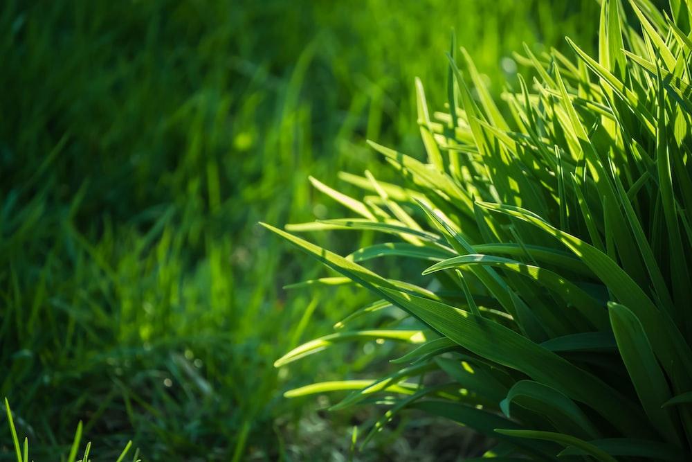 green grasses