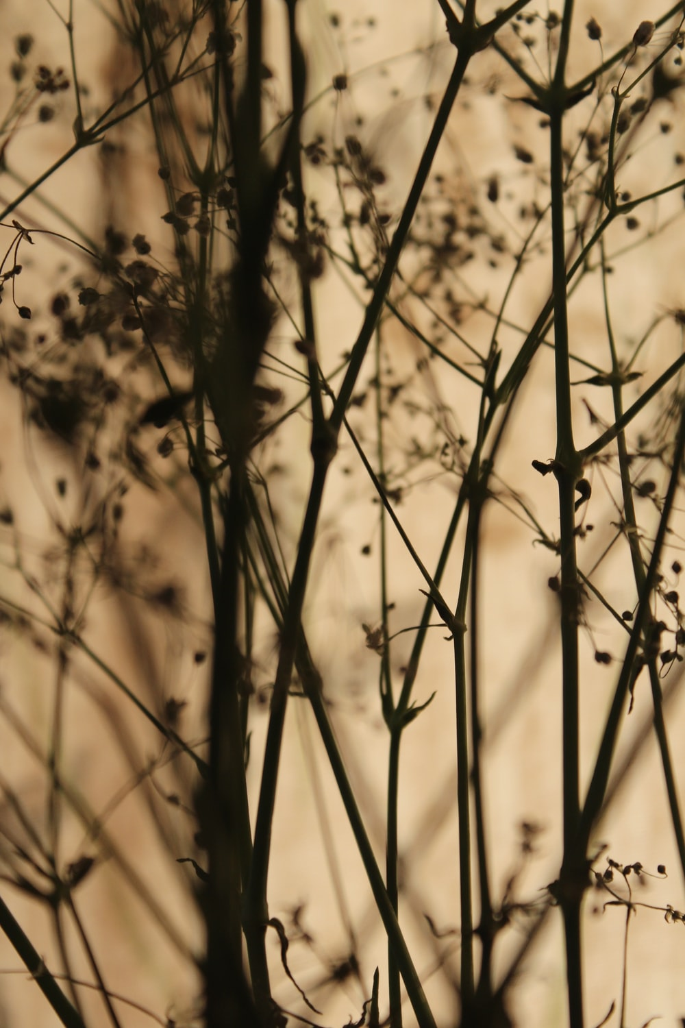 silhouette of plant stems