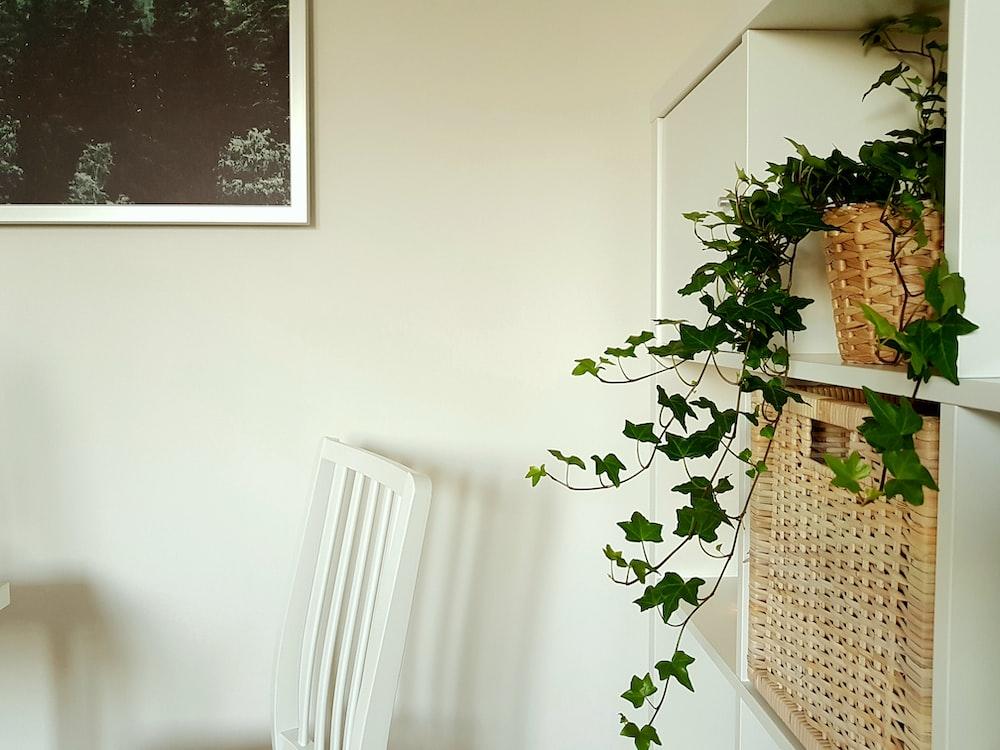 green leaf plant in basket on shelf