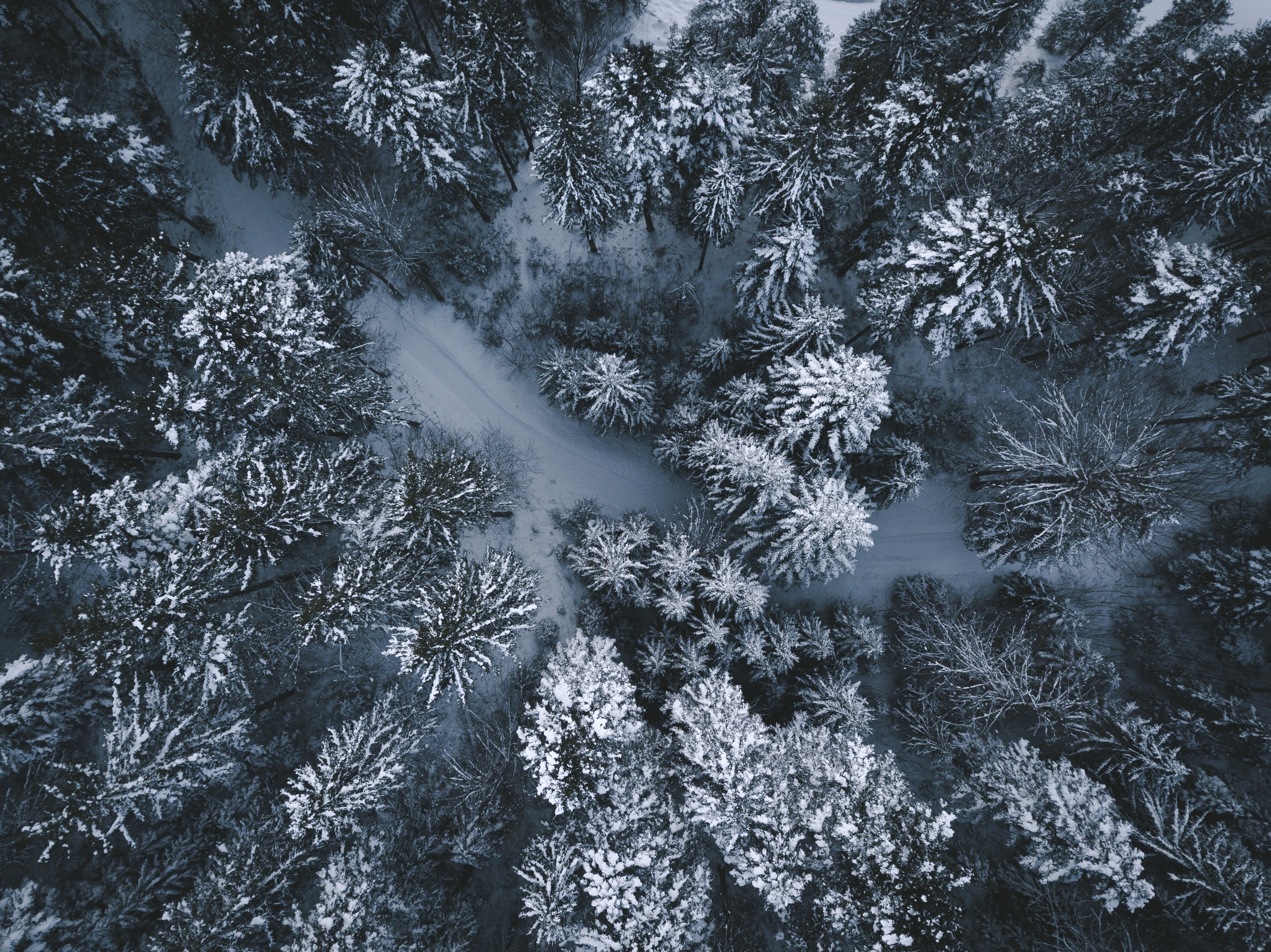 aerial photography on trees