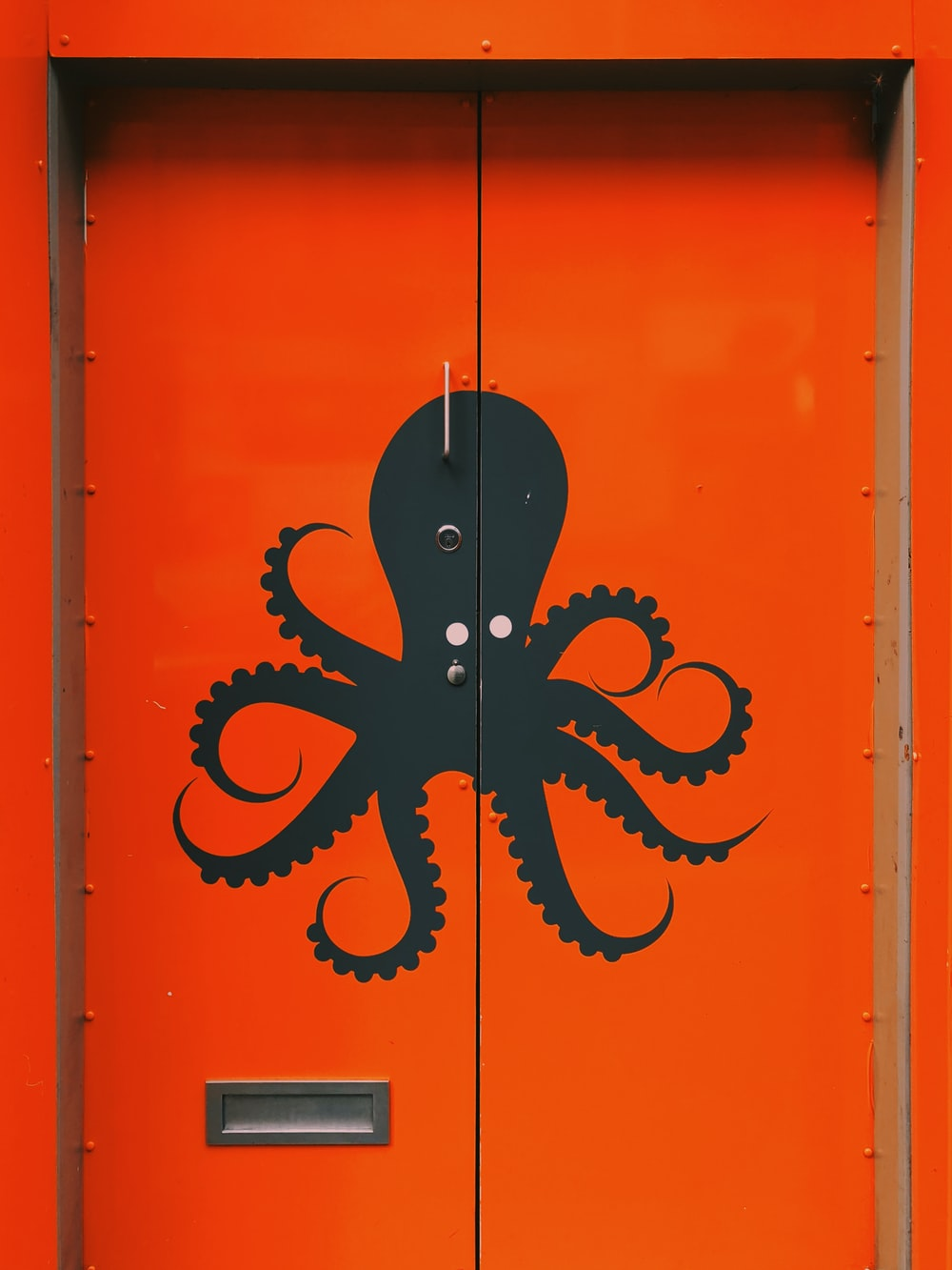 100 Octopus Pictures Hd Download Free Images On Unsplash