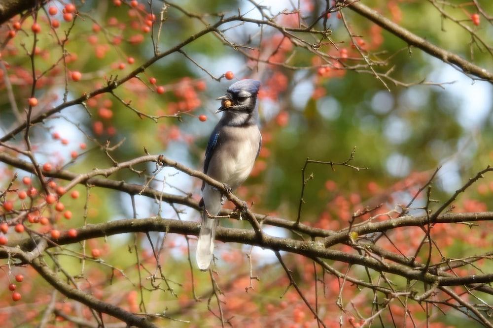 shallow focus photo of gray bird on tree branch