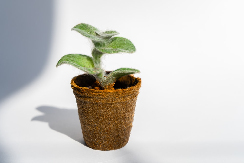 photo of green plant sprout