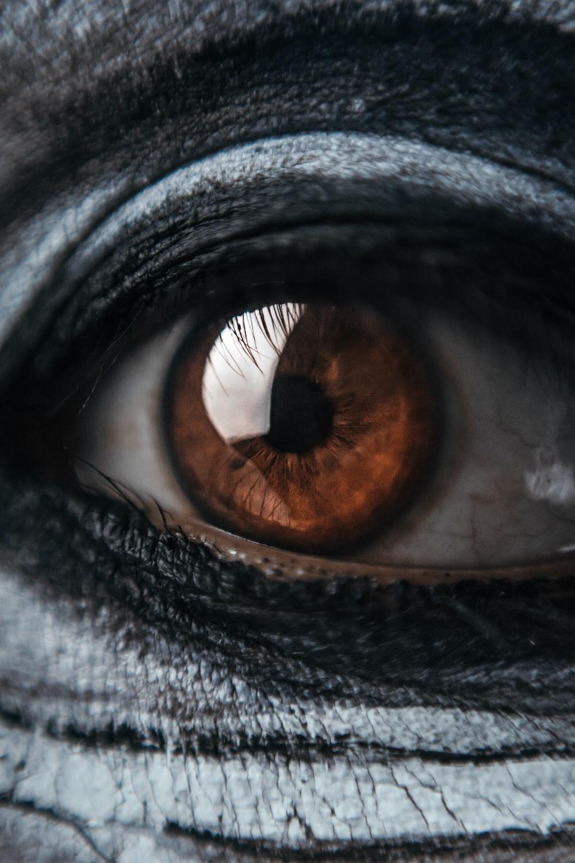 persons brown eye