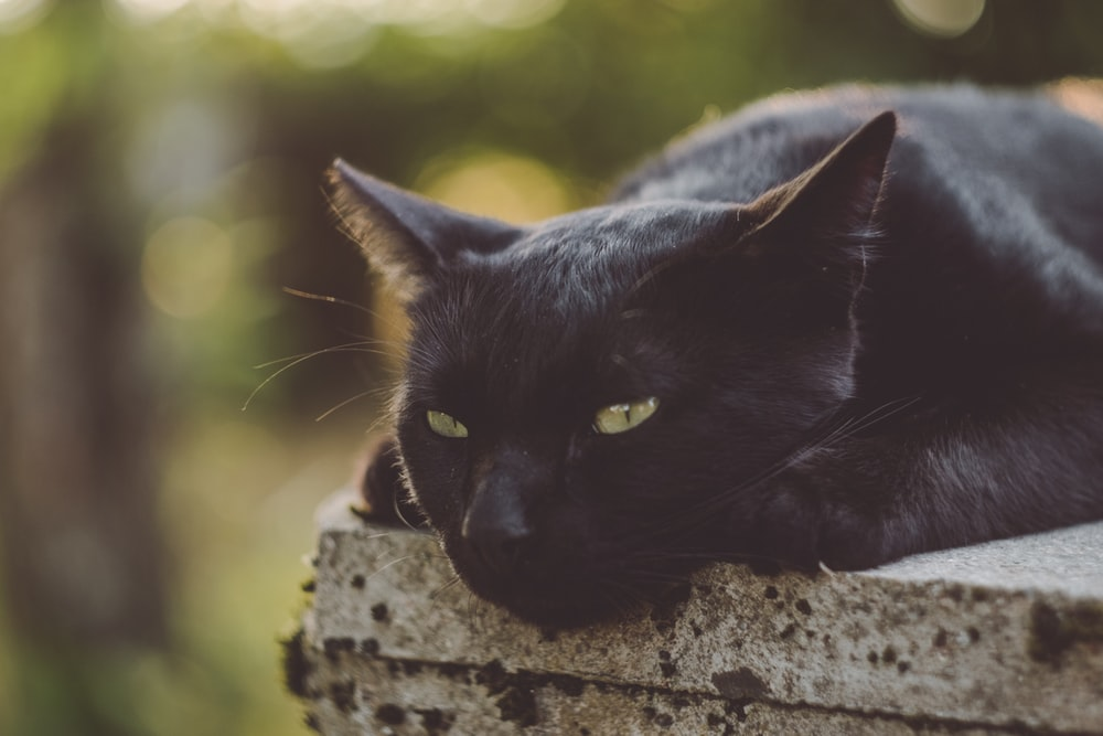 black cat on concrete platform