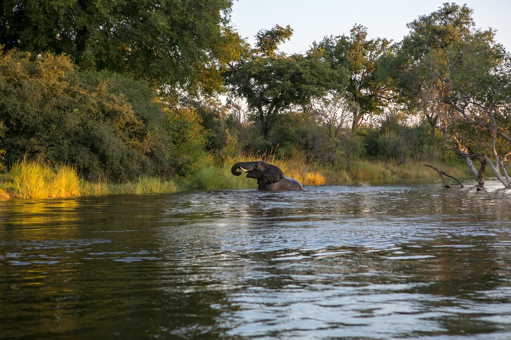 elephant of body of water near forest