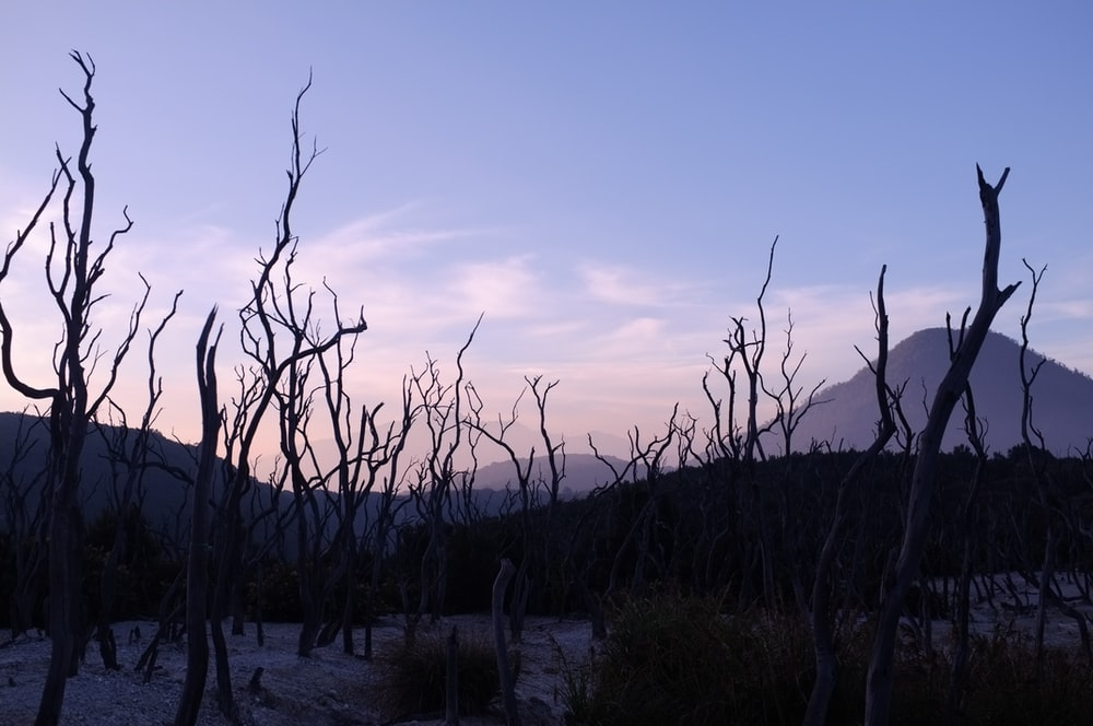 landscape photography of leafless trees