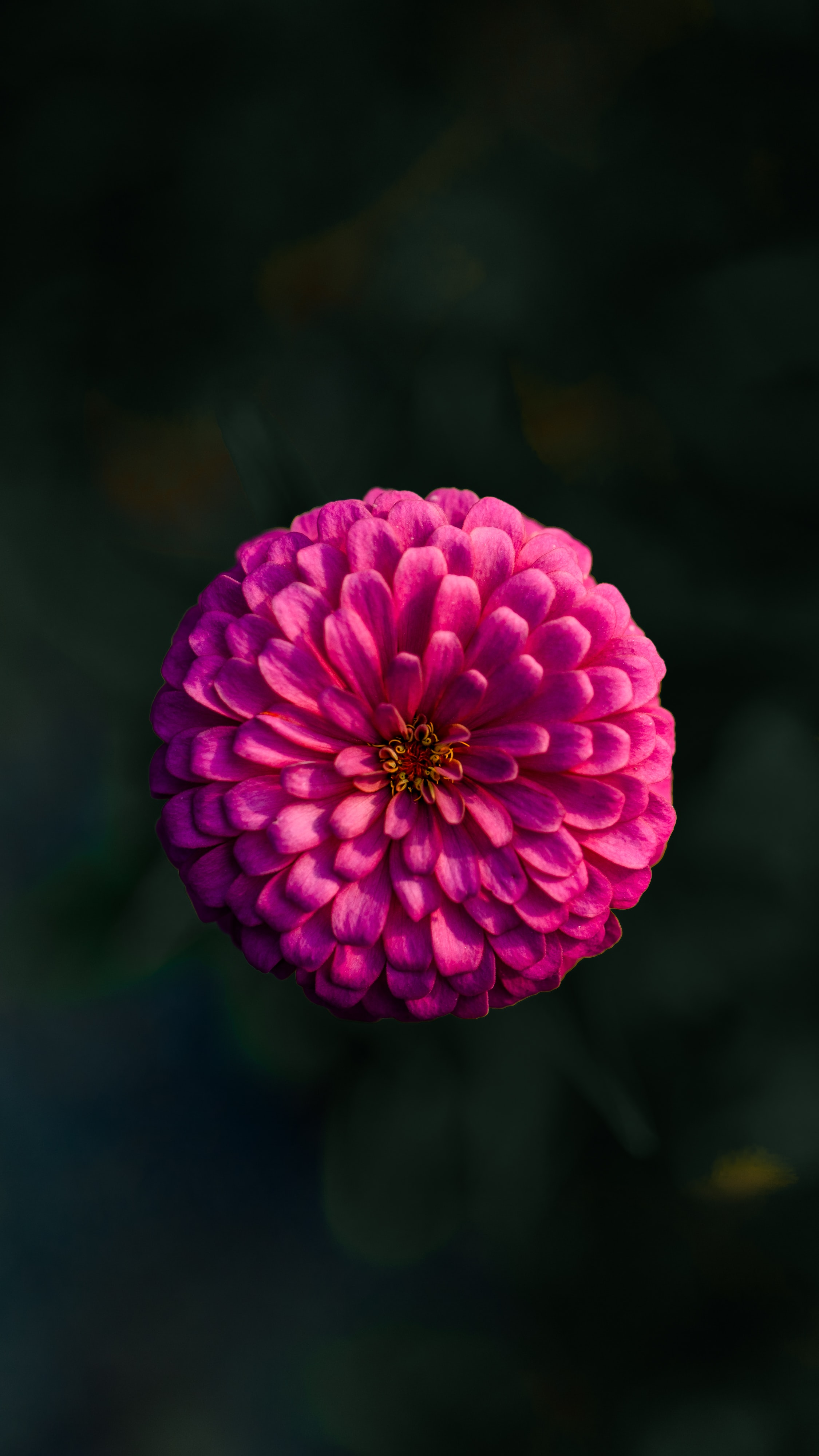 shallow focus photo of pink flower