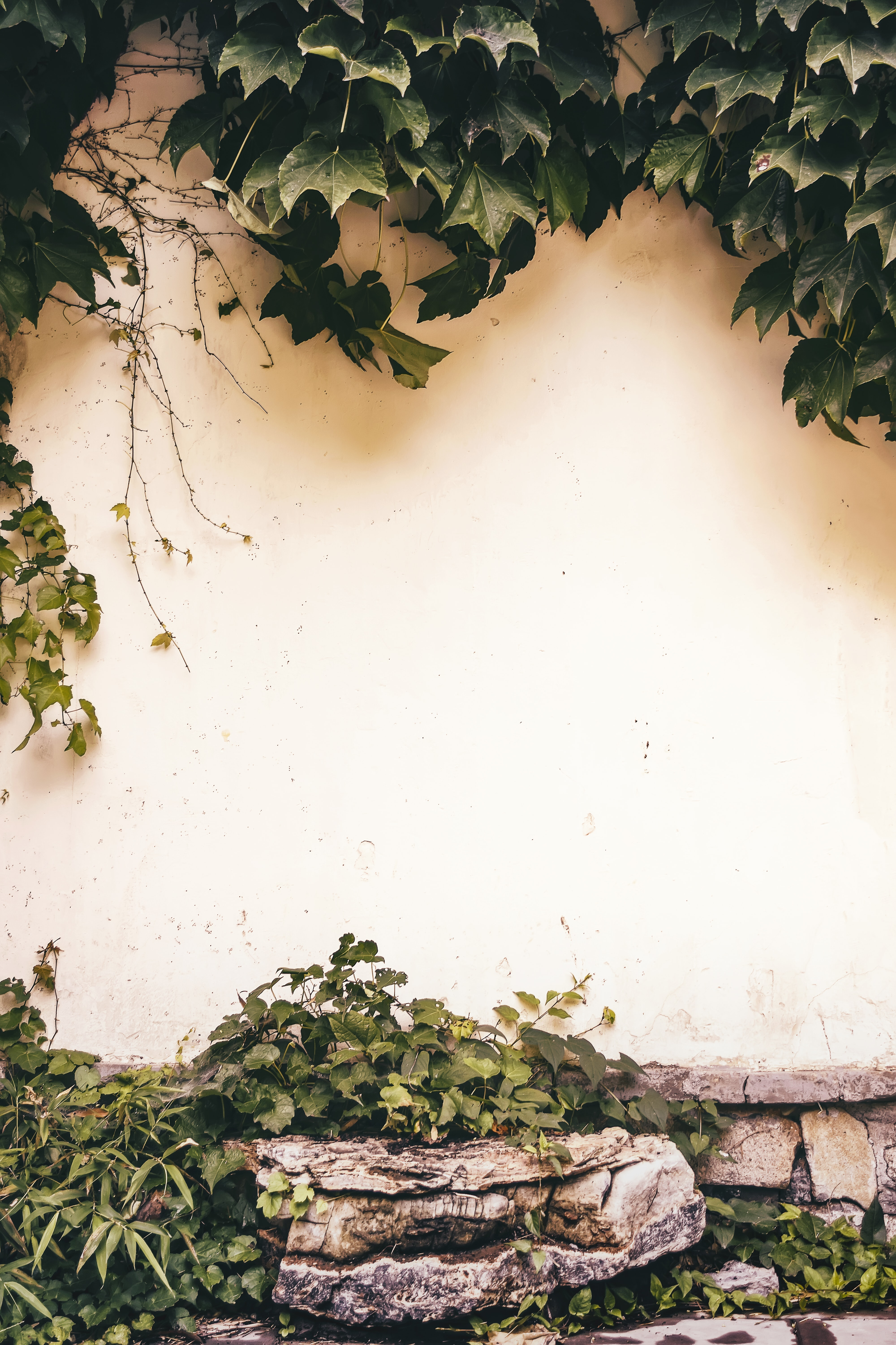 green plants beside yellow painted wall