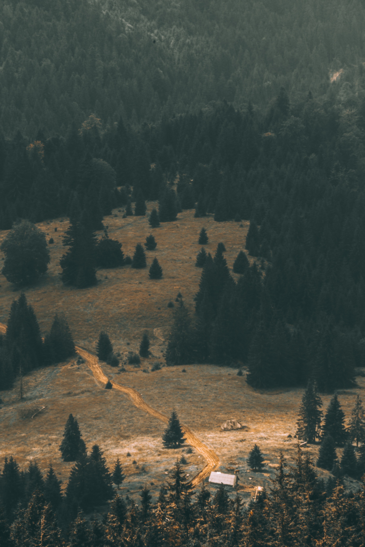 scenery of green trees