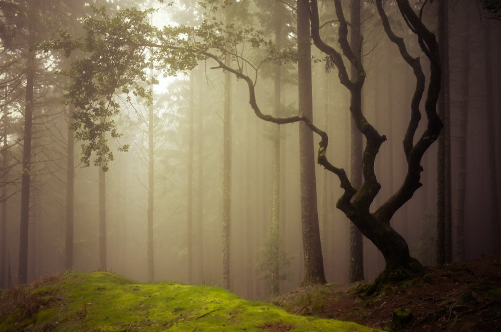 forest covered in fog during daytime