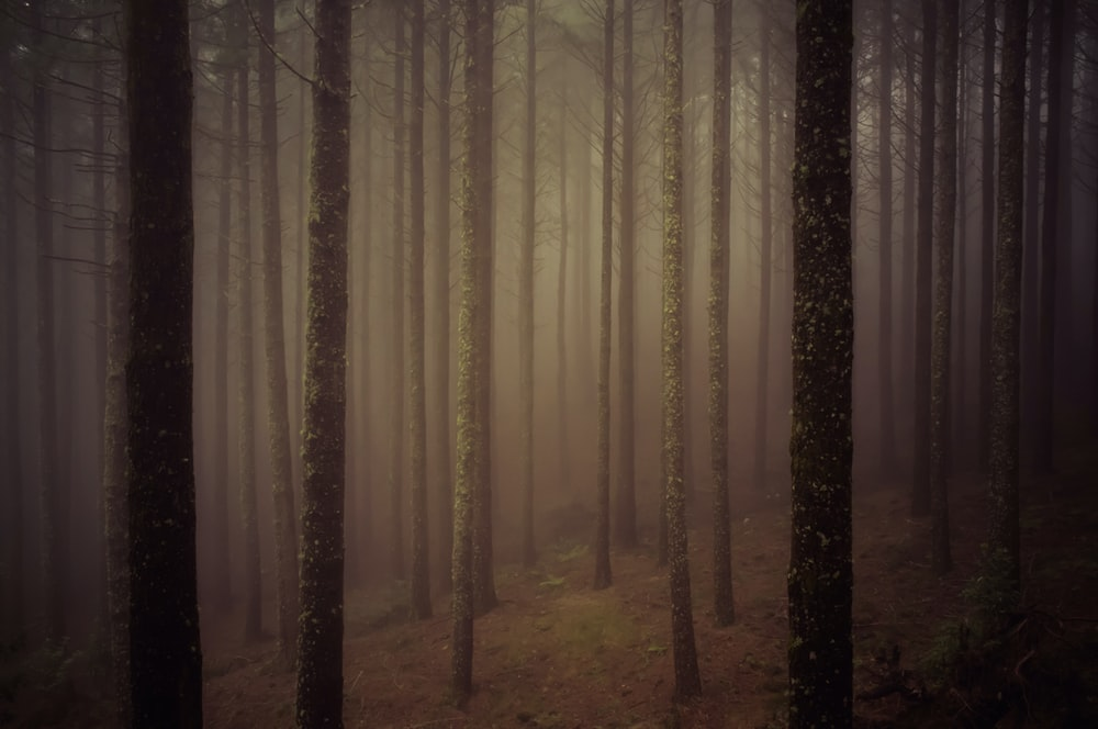 forest view with fog