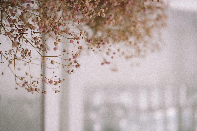 brown flowering tree