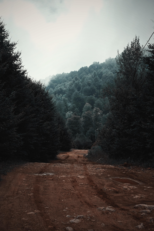 pathway between green trees under cloudy sky