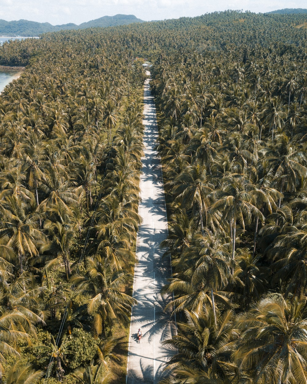 aerial view photography of coconut tree during daytime